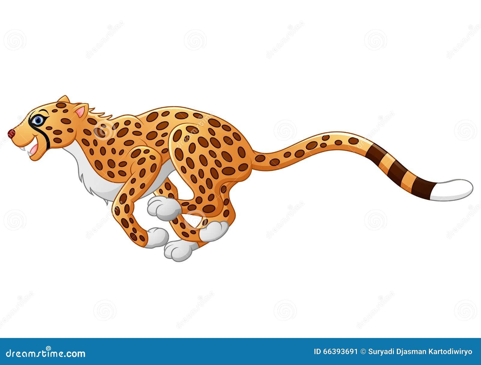 Running cheetah vector - photo#25