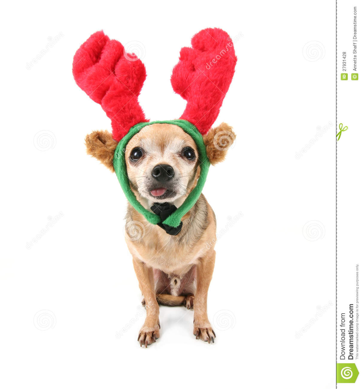 A Cute Chihuahua In A Christmas Hat Royalty Free Stock