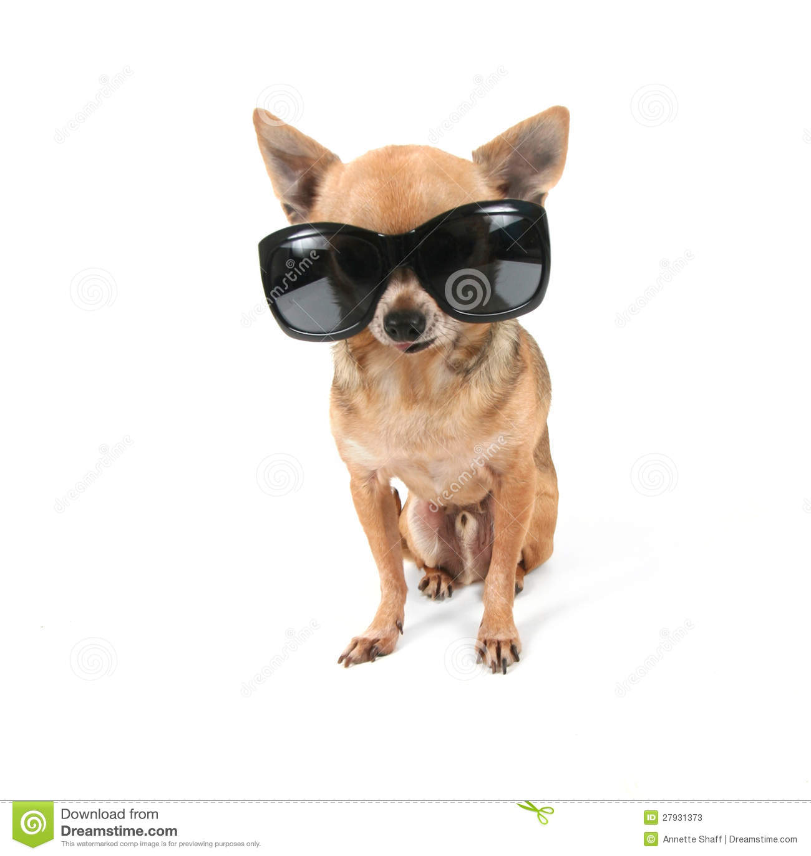 Small Dog Sunglasses