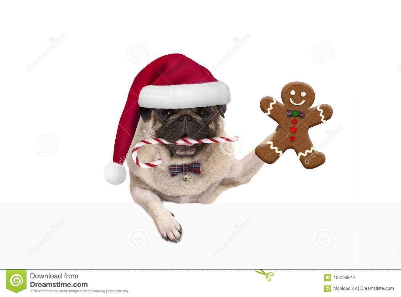 d697ced47271c Cute Christmas Pug Dog With Santa Hat And Candy Cane