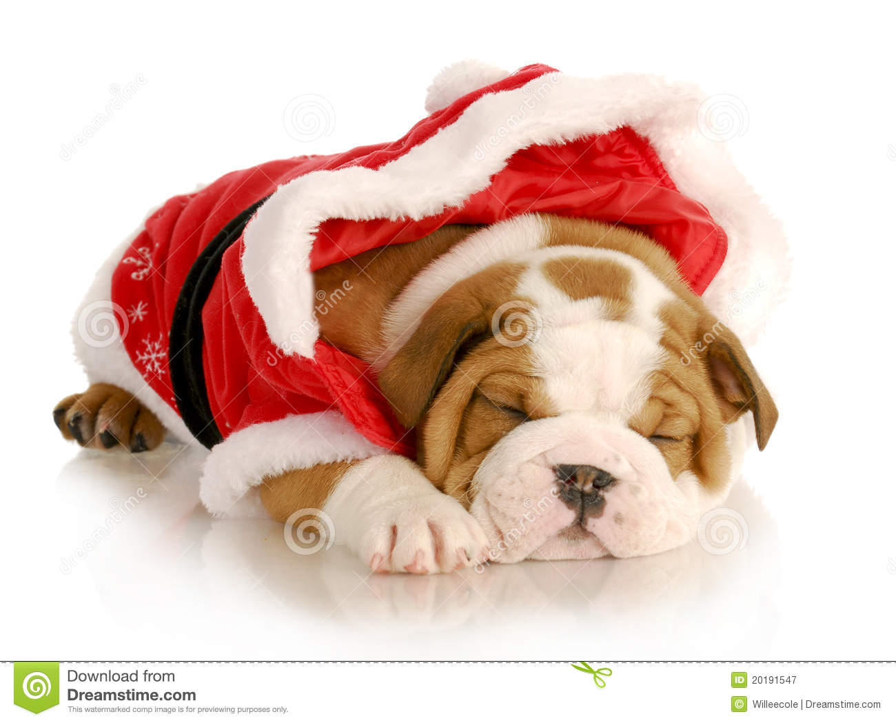 Cute Christmas Puppies.Cute Christmas Puppy Stock Image Image Of Christmas 20191547