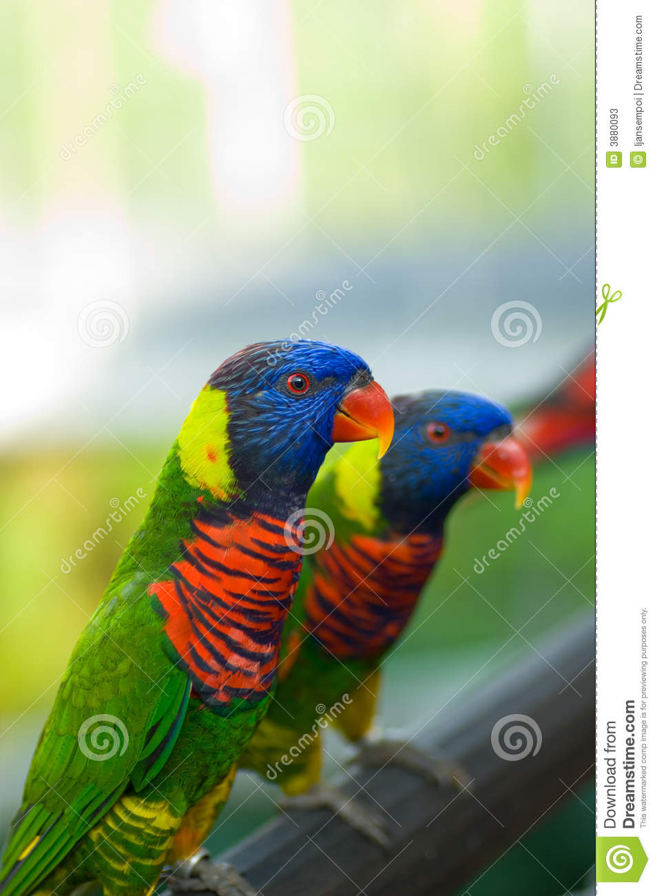Cute Colorful Birds Stock Image Image Of Stand Color