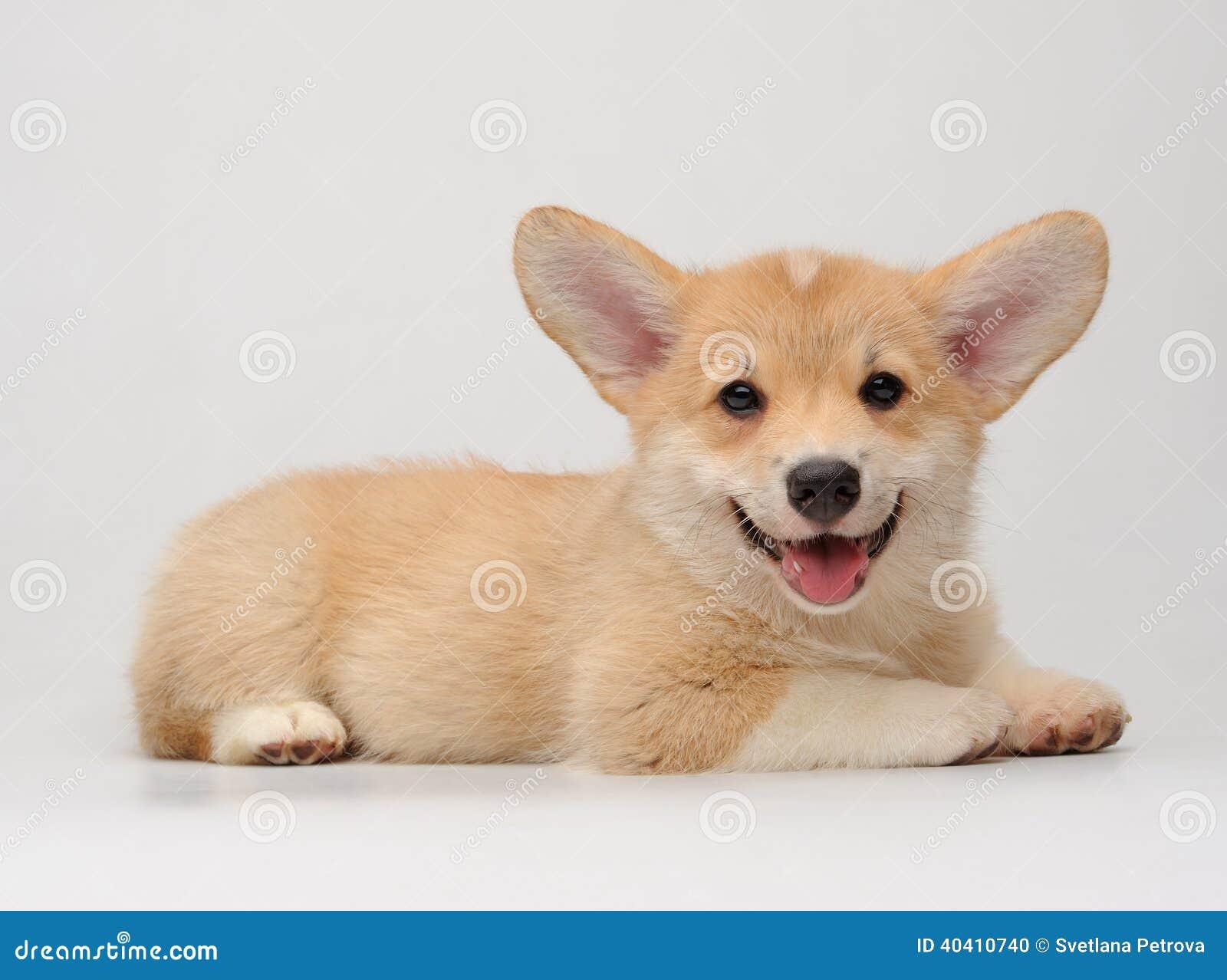 smiling dog white background - photo #17