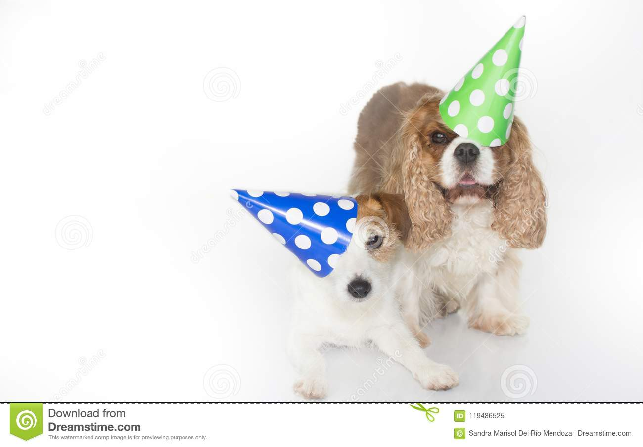 CUTE COUPLE CELEBRATING A BIRTHDAY PARTY AND WEARING A BLUE AND