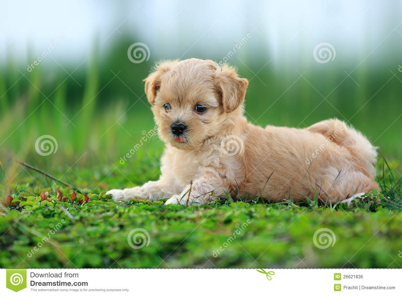 cute dog stock photo. image of lovely, cutes, animal - 26621836