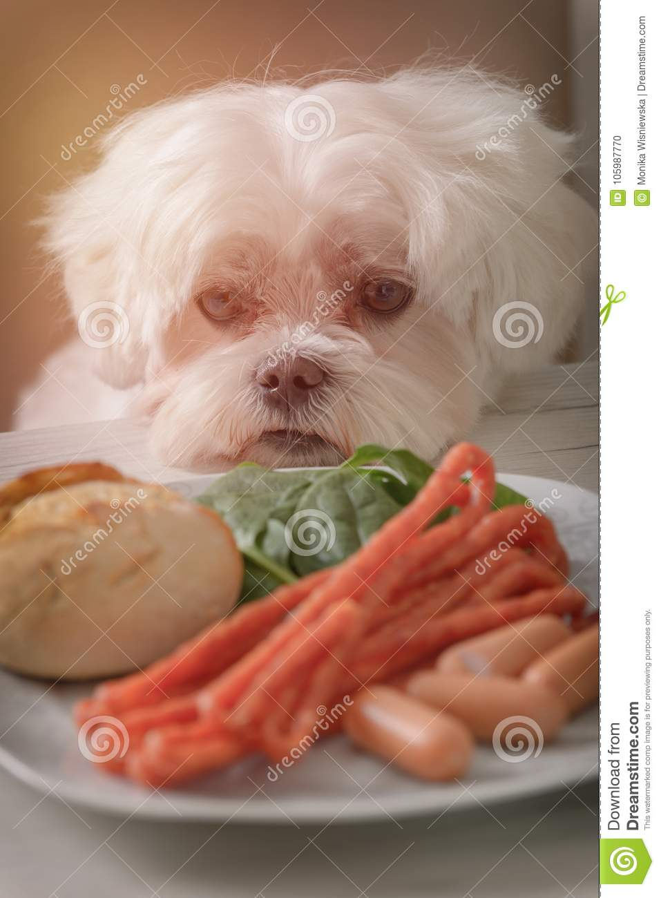 Cute dog asking for food