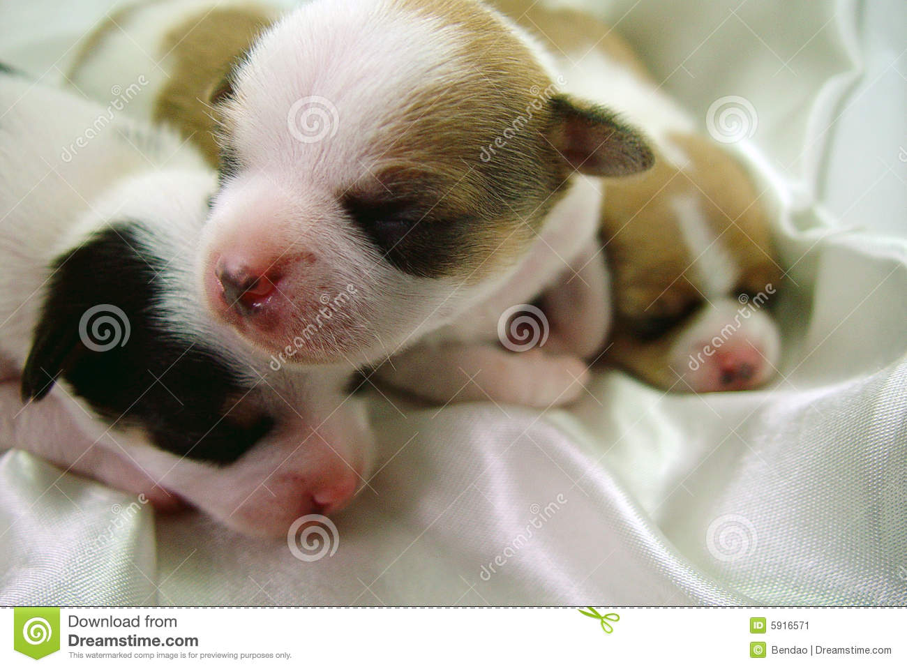 Cool Baby Brown Adorable Dog - cute-dog-baby-5916571  Perfect Image Reference_55745  .jpg
