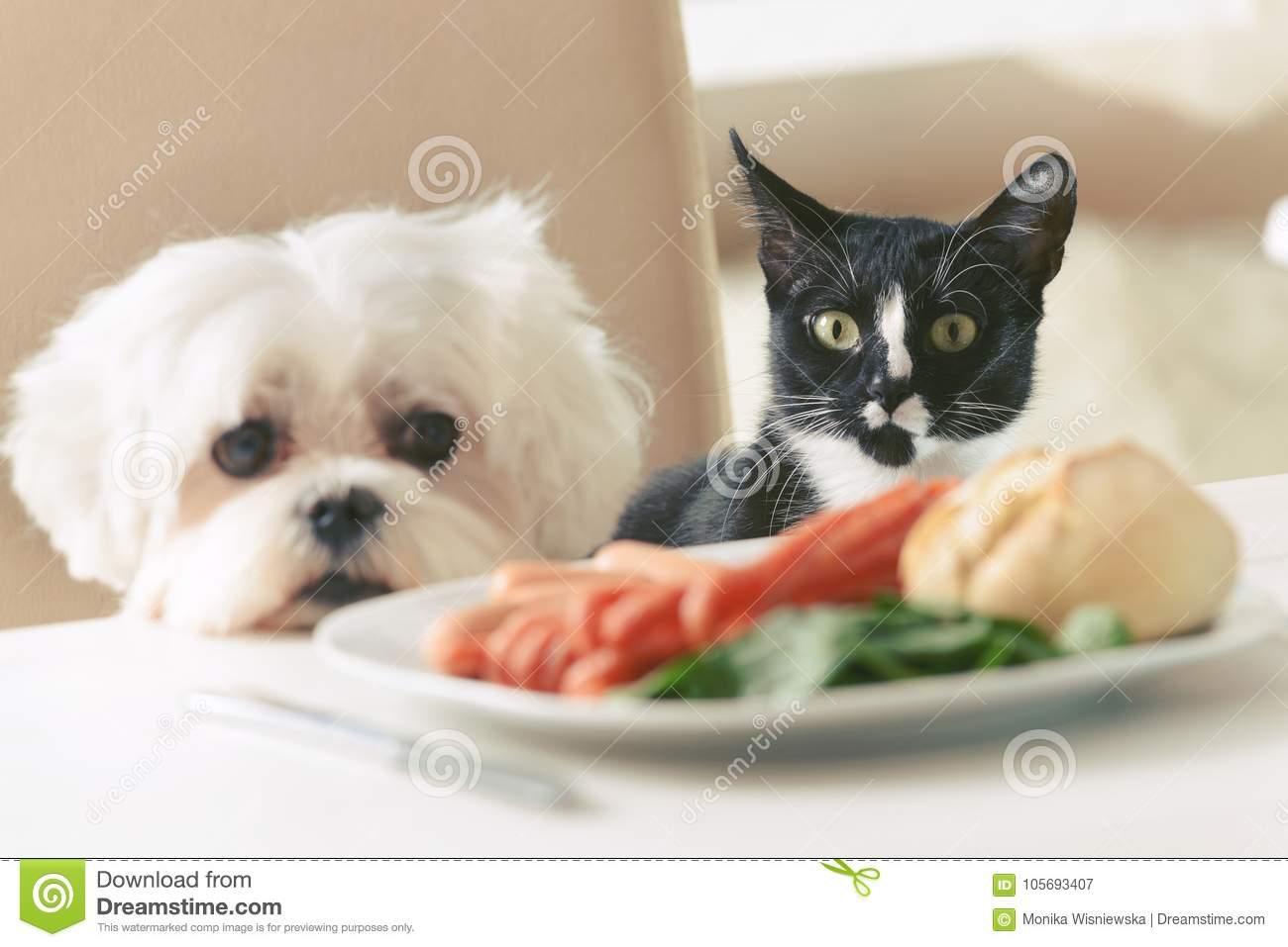 Cute dog and cat asking for food