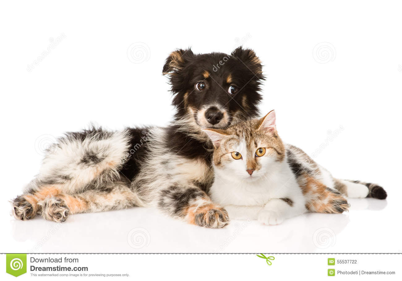 cute dog with cat on white background stock photo image