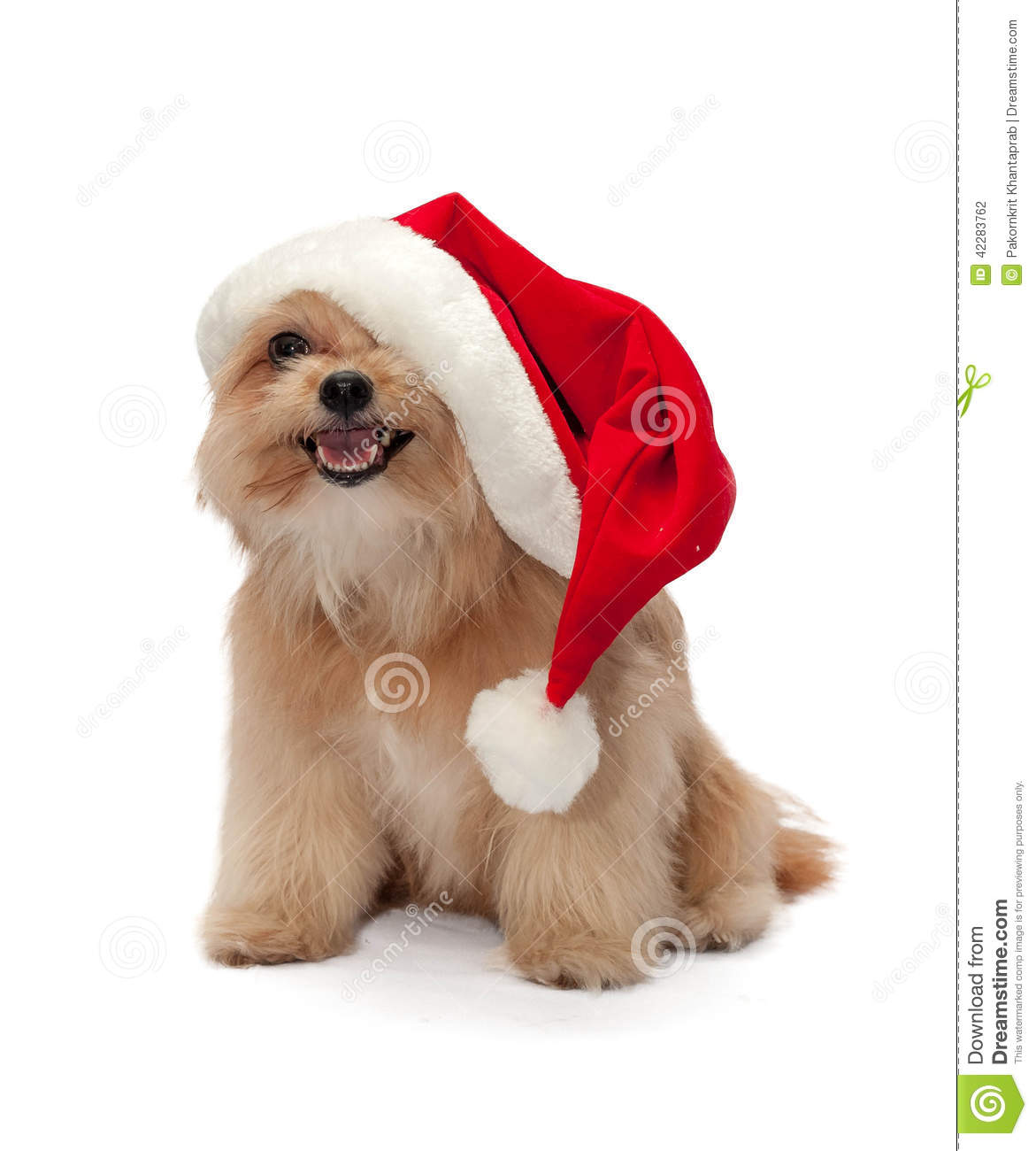 Cute Dog In Christmas Hat Stock Photo Image Of Looking 42283762