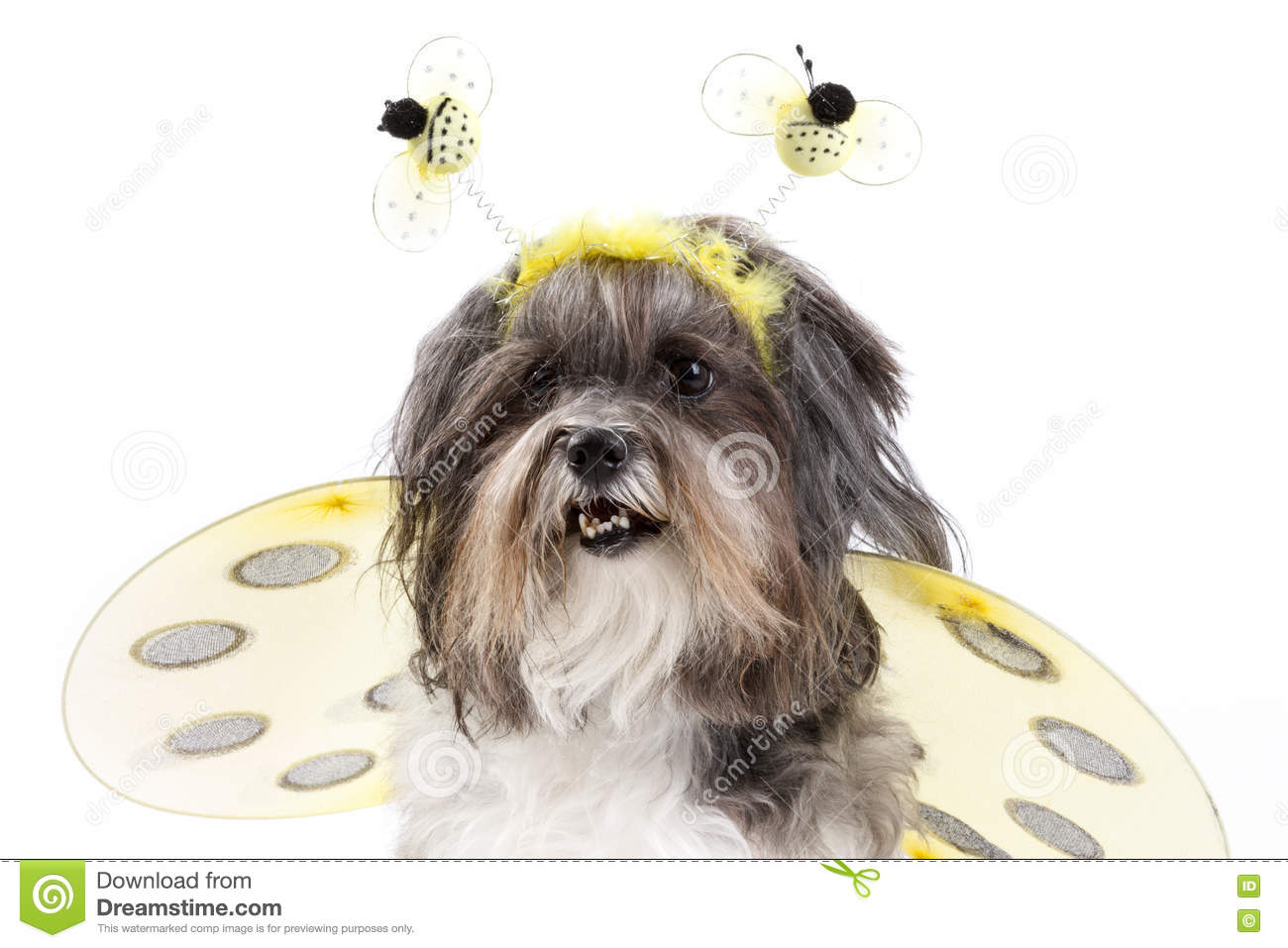 Cute Dog Dressed Up As A Bumble Bee Stock Image Image Of Looking