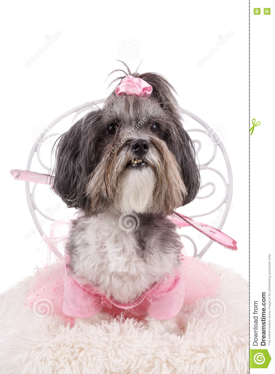Cute Dog Dressed Up Like A Fairy For Halloween Stock Image Image