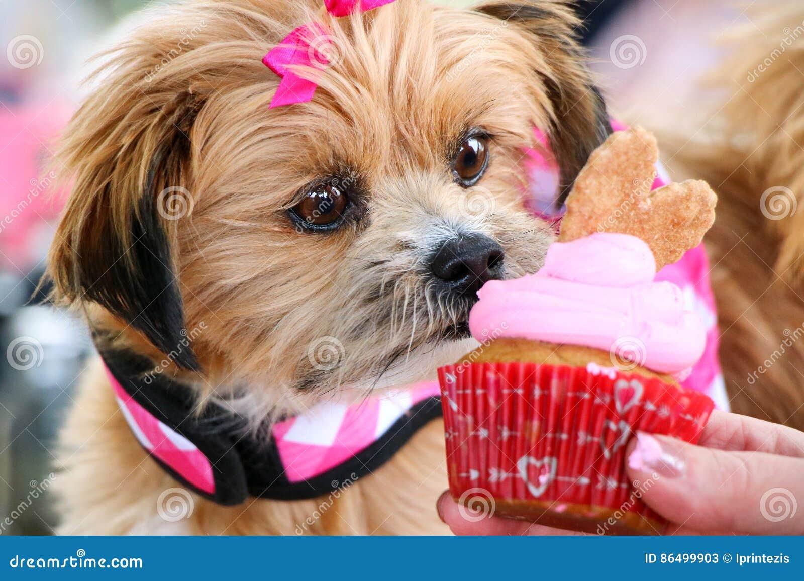 Cute Dog Eating Birthday Cupcake Stock Image - Image of