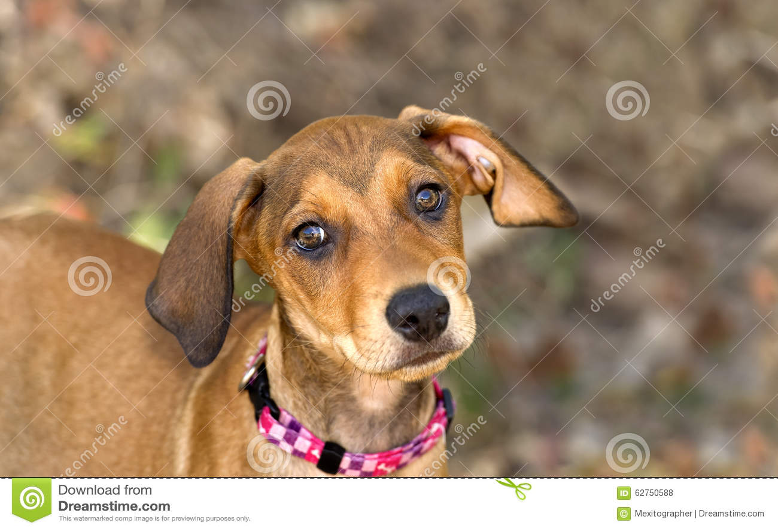 Cute Dog With Big Eyes