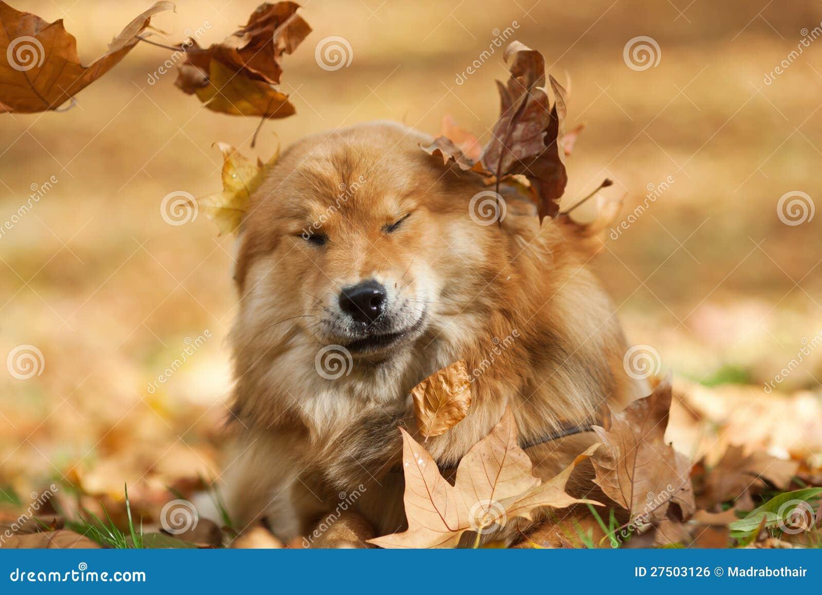 Cute dog between falling leaves