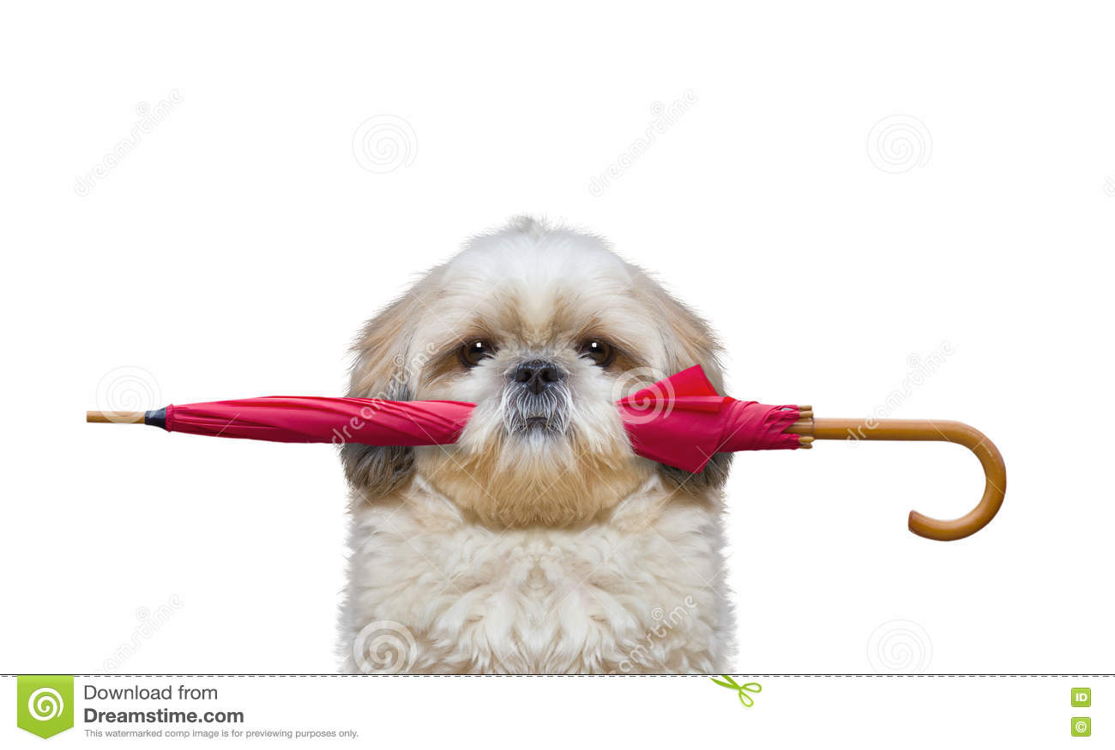 cute dog royalty free stock image cartoondealer com Dog Clip Art sleeping dog clipart