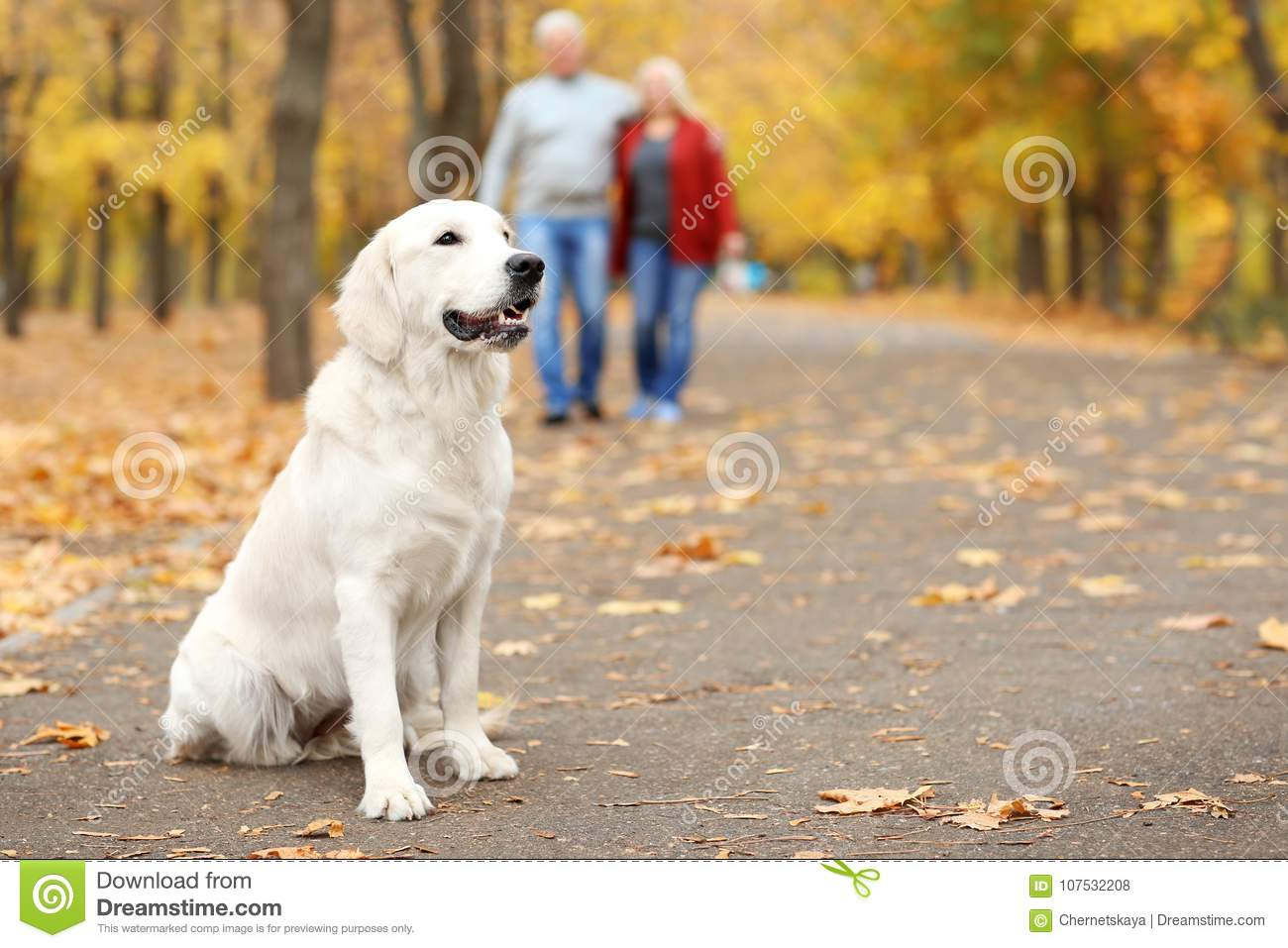 Cute dog on pathway in park with blurred couple