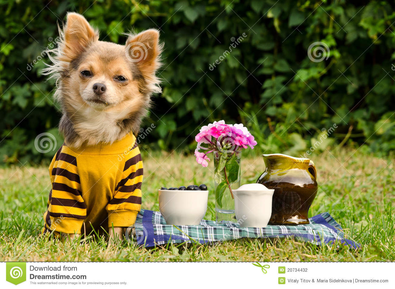 Cute Dog At The Picnic In Summer Garden Stock Photography ...