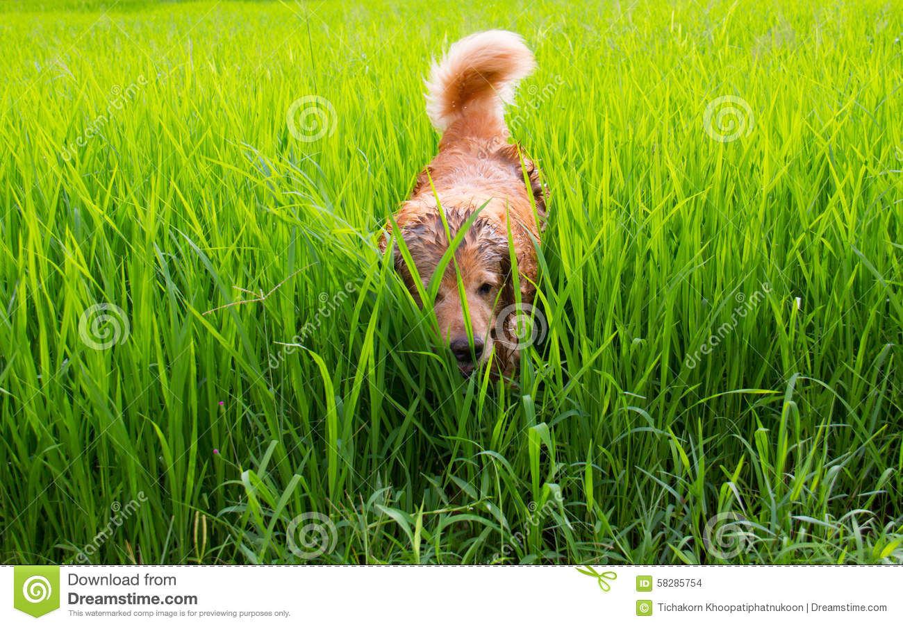 Grin - Green Grass Home - Sharing Water - Familiarly Strange - Doors