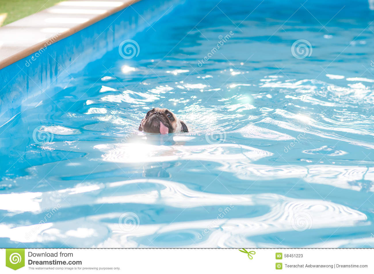 Dog On Pool Float Stock Image 69163129
