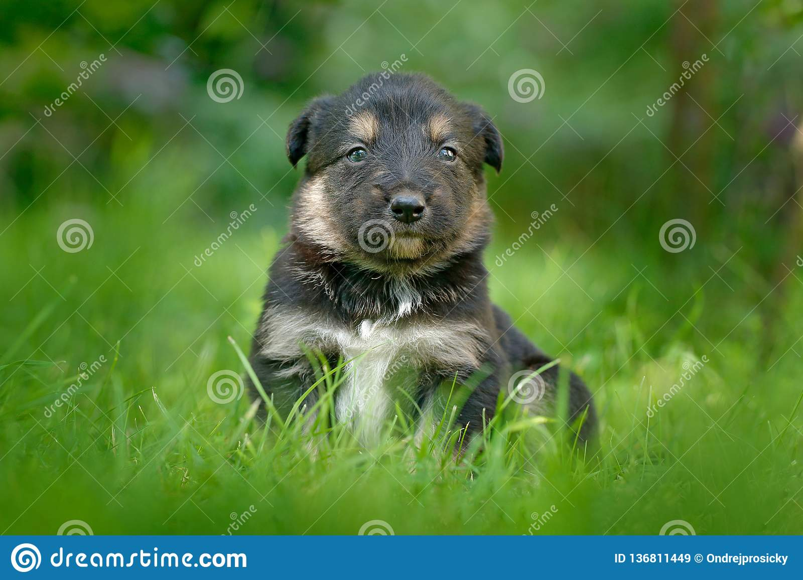 Cute dog pup sitting in the green grass. Animal in the garden. Unhappy young cub dog without mother. Small whelp with tip up ears
