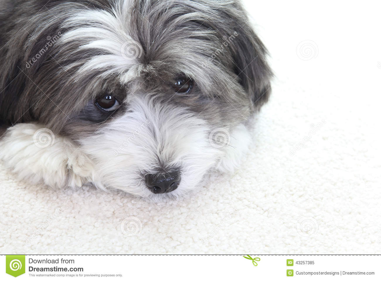 Cool Sad Black Adorable Dog - cute-dog-sad-black-white-looks-up-43257385  Picture_765239  .jpg