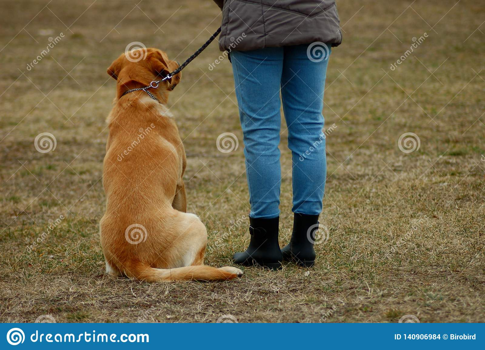 Cute dog sitting next to his owner, learning in dog-school