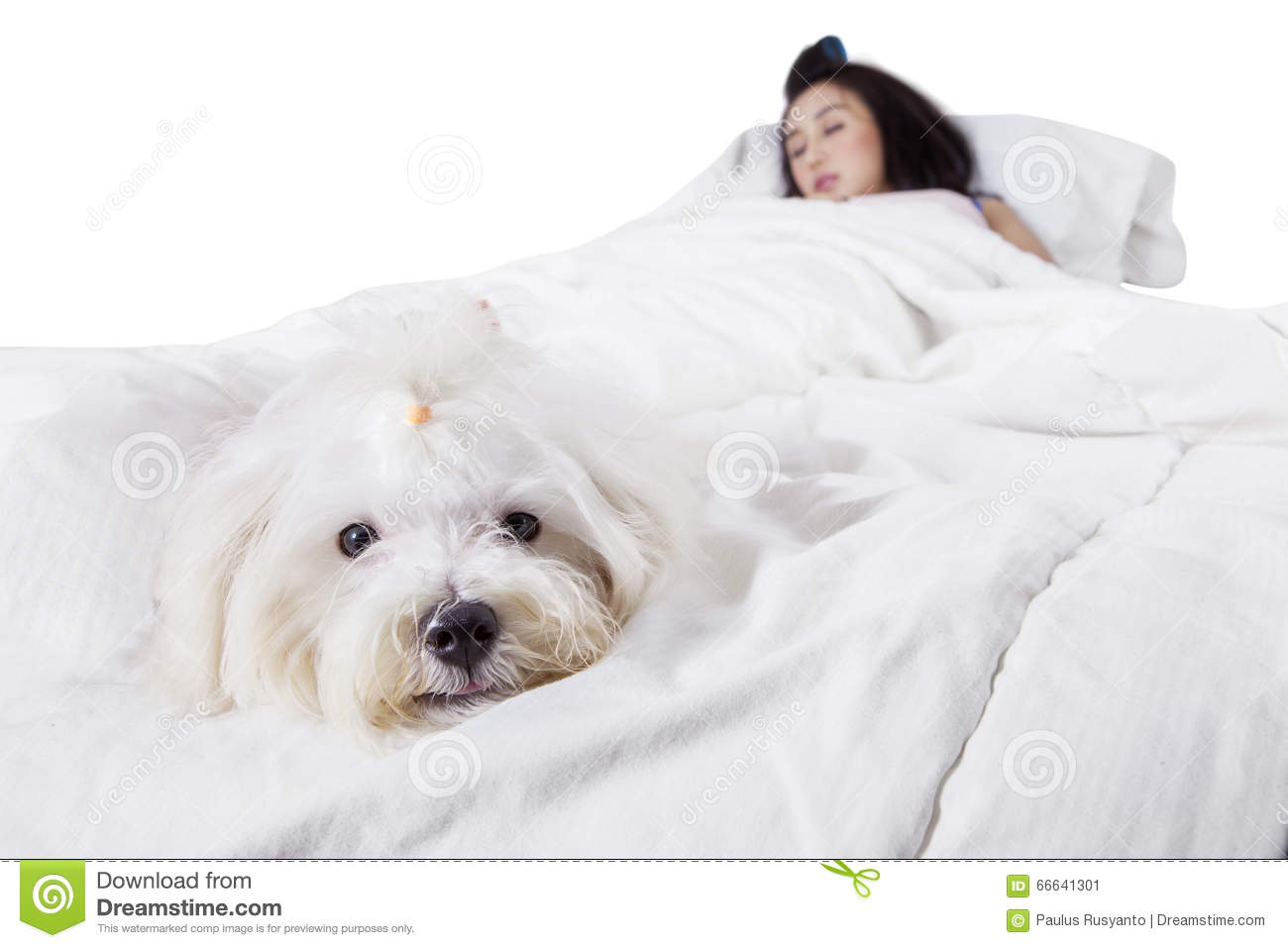 Dog Sleeping In Owners Bed With Owner