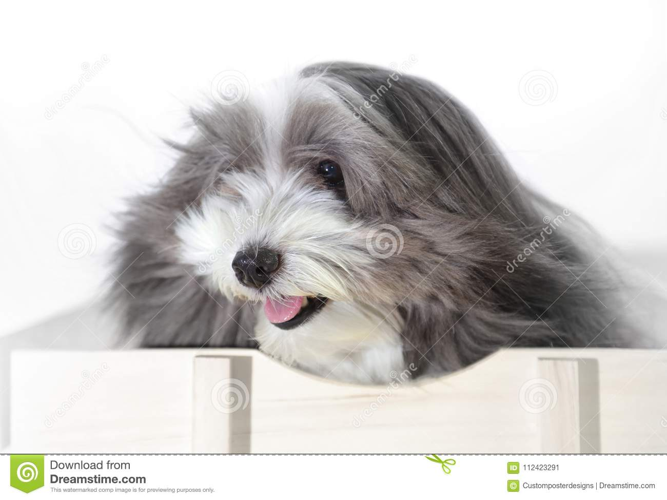 Download A Cute Dog With The Wind Blowing In His Face. Stock Image - Image of adorable, frontal: 112423291