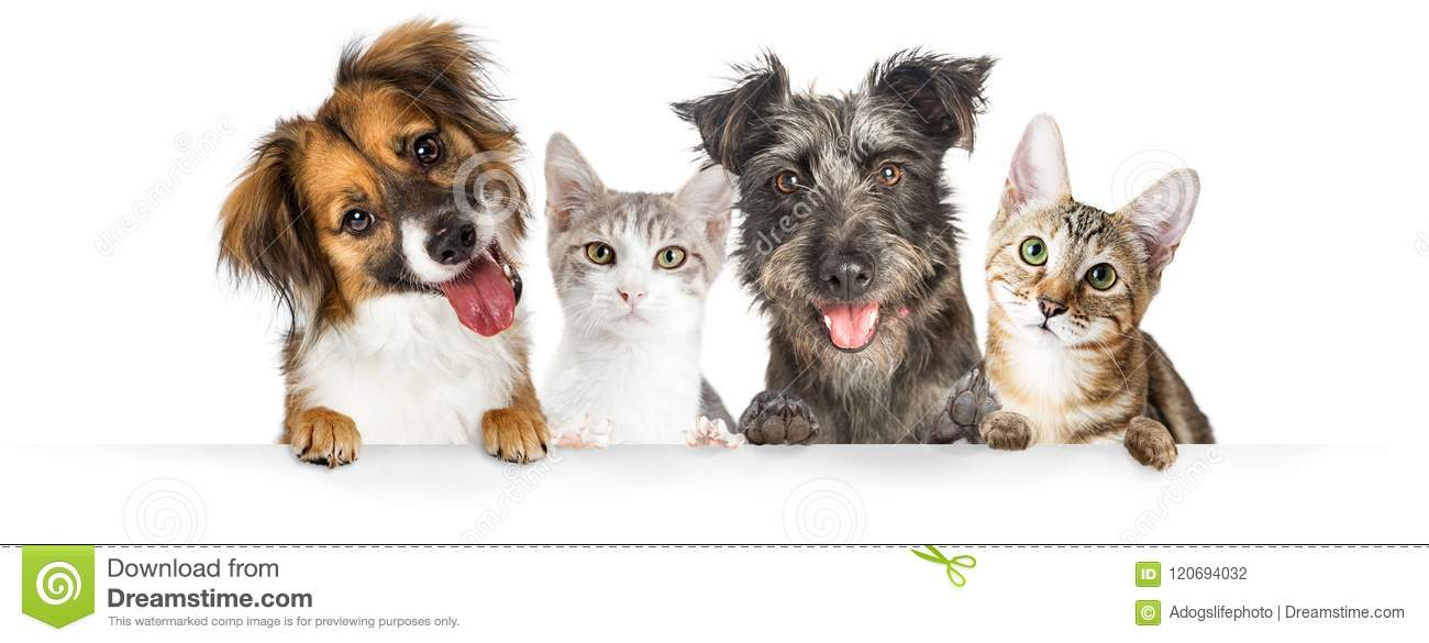 Dogs And Cats Paws Over Website Banner Stock Photo Image Of