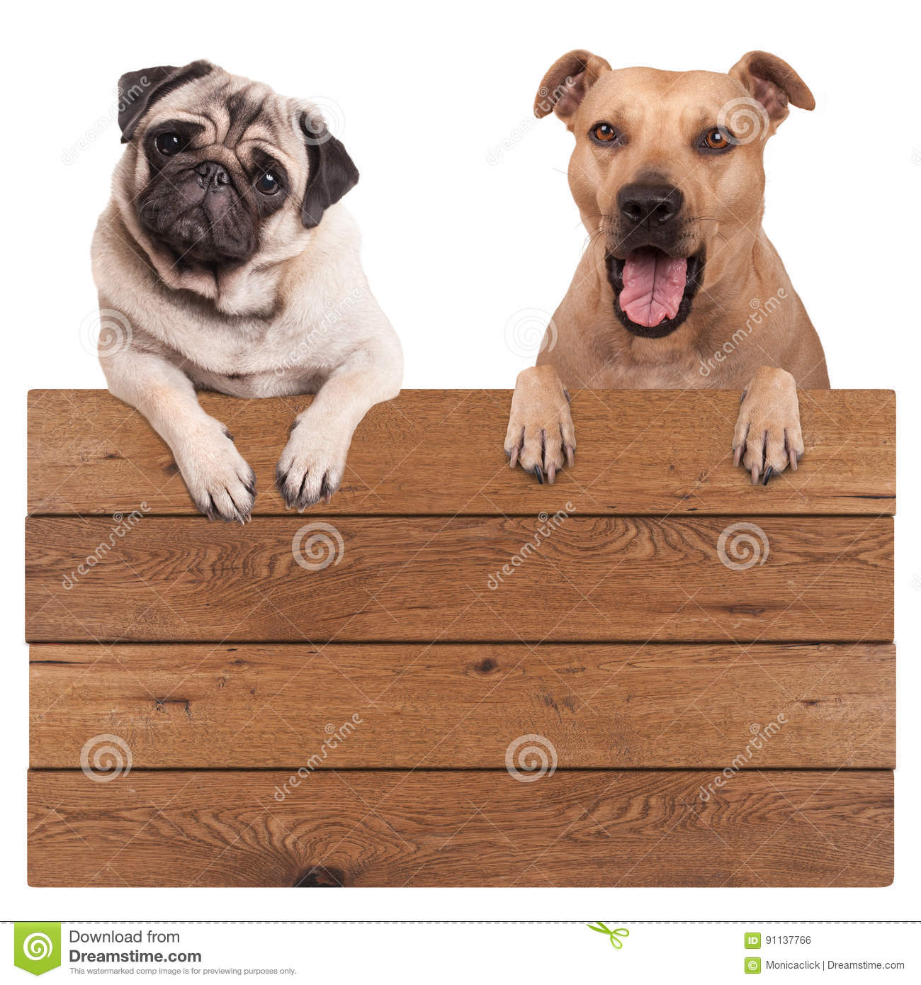 pug paws funny pug dogs royalty free stock photo cartoondealer 9756