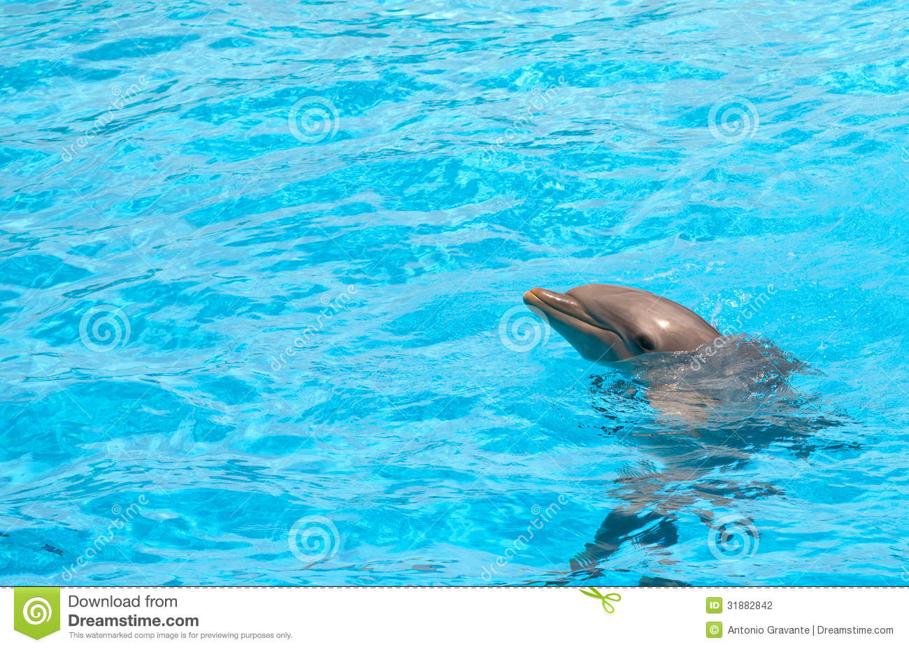cute dolphin stock photography image 31882842