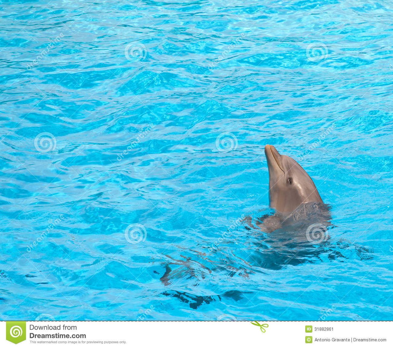 Cute dolphin stock image image of happy entertainment 31882861 for Poole dolphin swimming pool prices