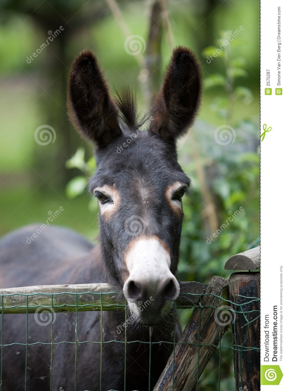 Cute Donkey Royalty Free Stock Photography Image 2575287