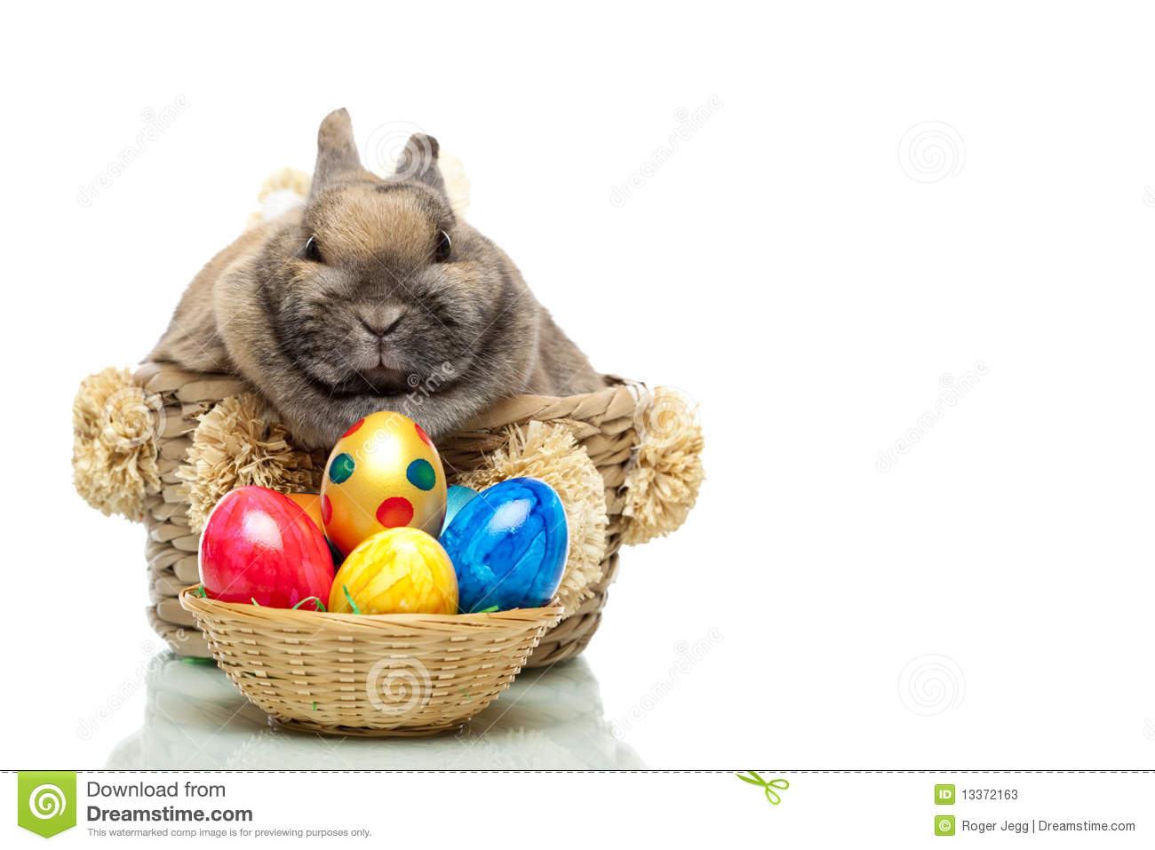 cute easter bunny with eggs sitting in basket stock photos image