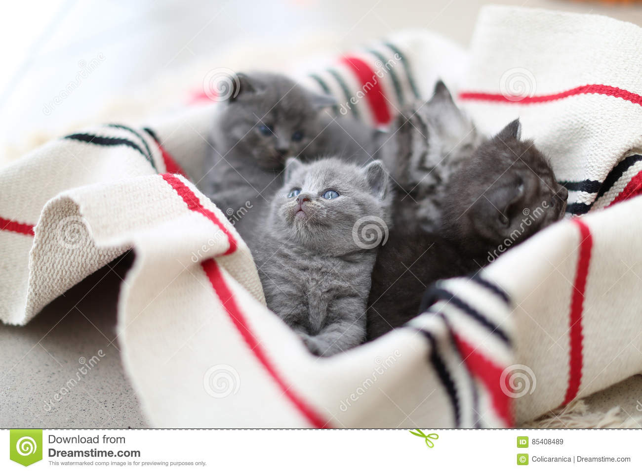 Cute face, newly born kittens looking up
