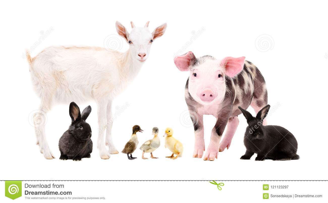 Cute farm animals standing together
