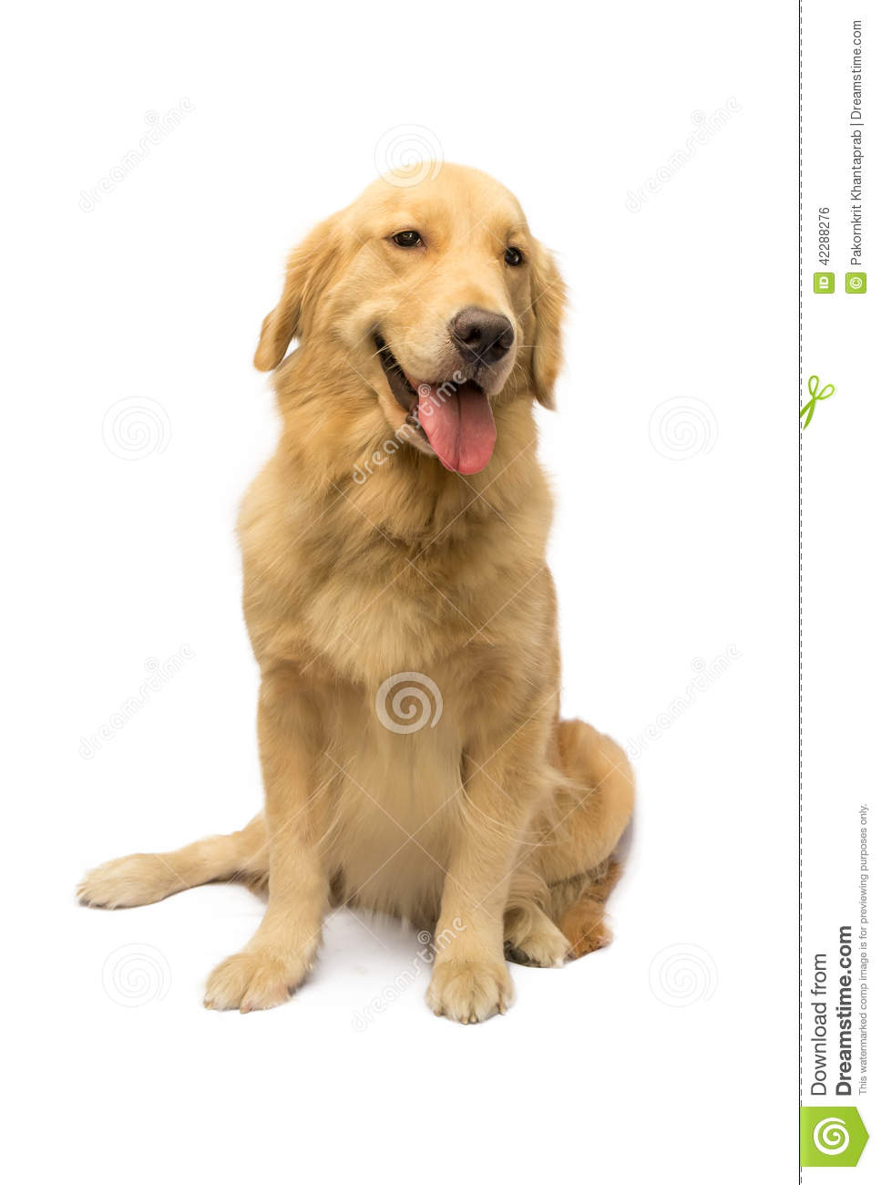 Woman and fucking retriever Golden