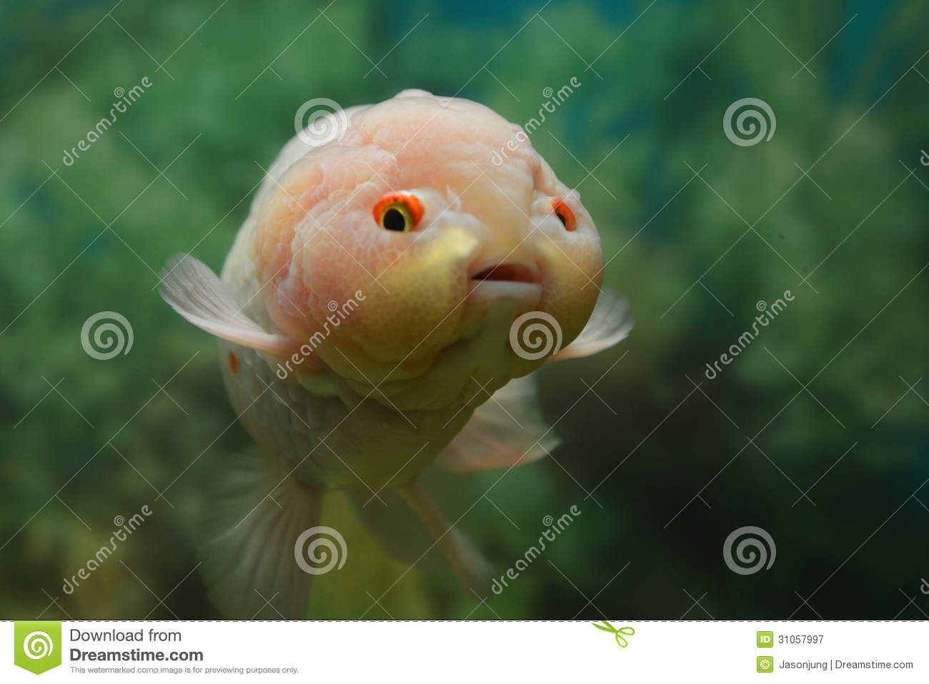 Sanity sunday precious lives for What does it mean to dream about fish
