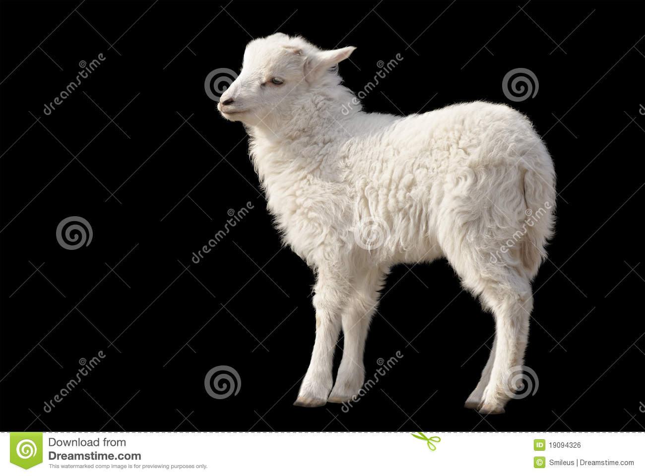 Cute Fluffy Lamb On Black Background Royalty Free Stock ...
