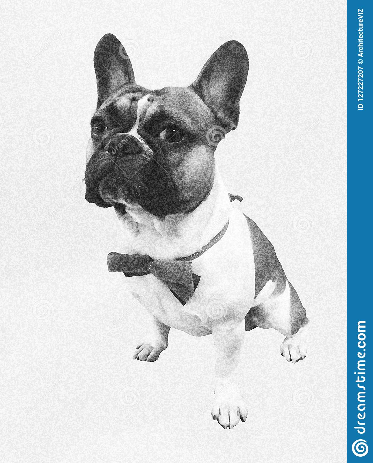 Cute french bouledogue bulldog sitting, dressed up for a party with little bow-tie, on white background