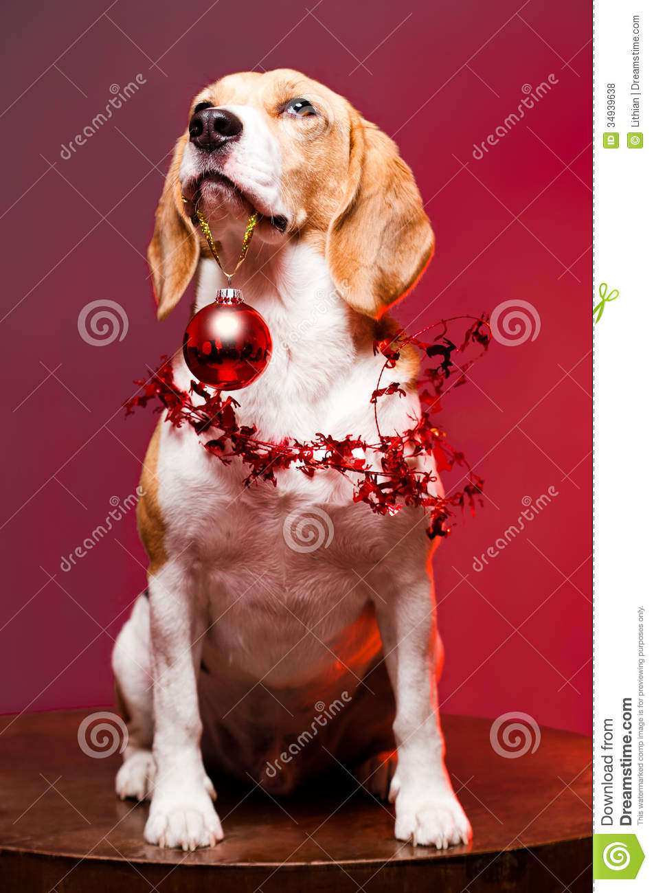 Cute Funny Christmas Dog. Royalty Free Stock Photos - Image: 34939638