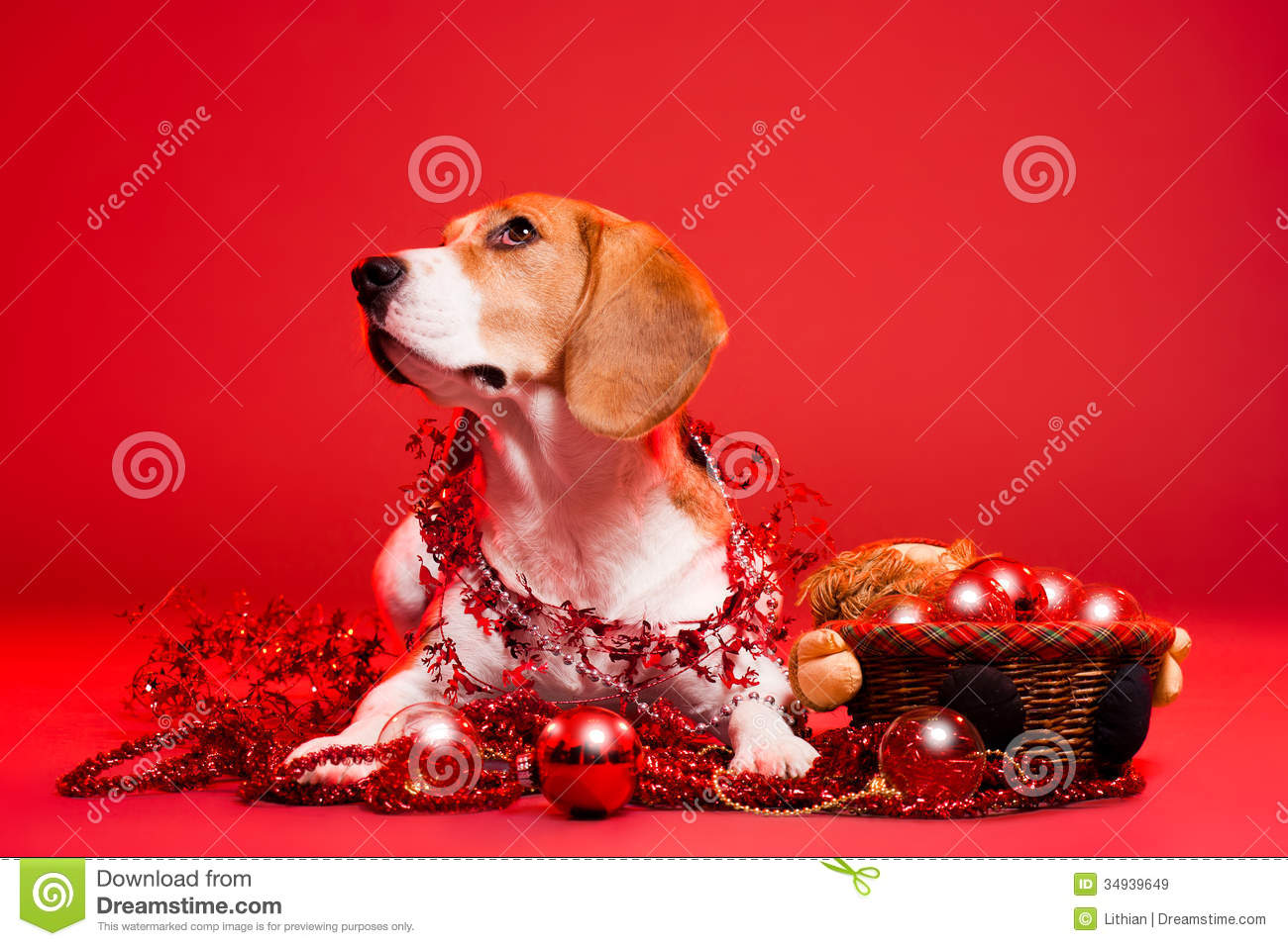 cute funny christmas dog