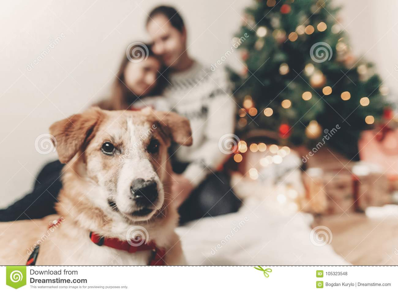 Download Cute Funny Dog Looking In Front And Happy Stylish Family Fest Stock Photo