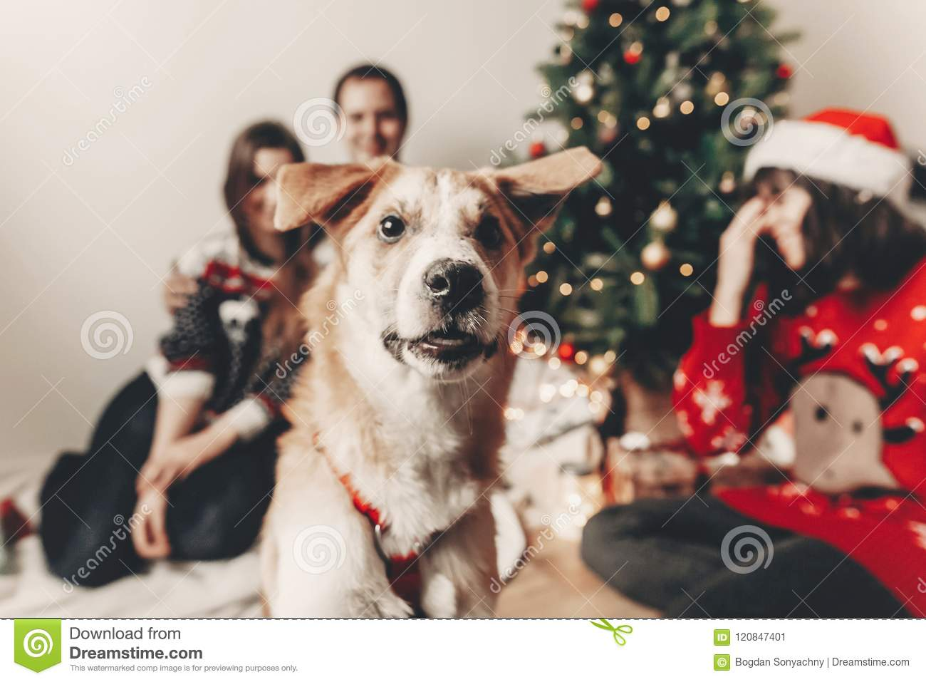 Cute Funny Dog Looking In Front And Happy Stylish Family Fest