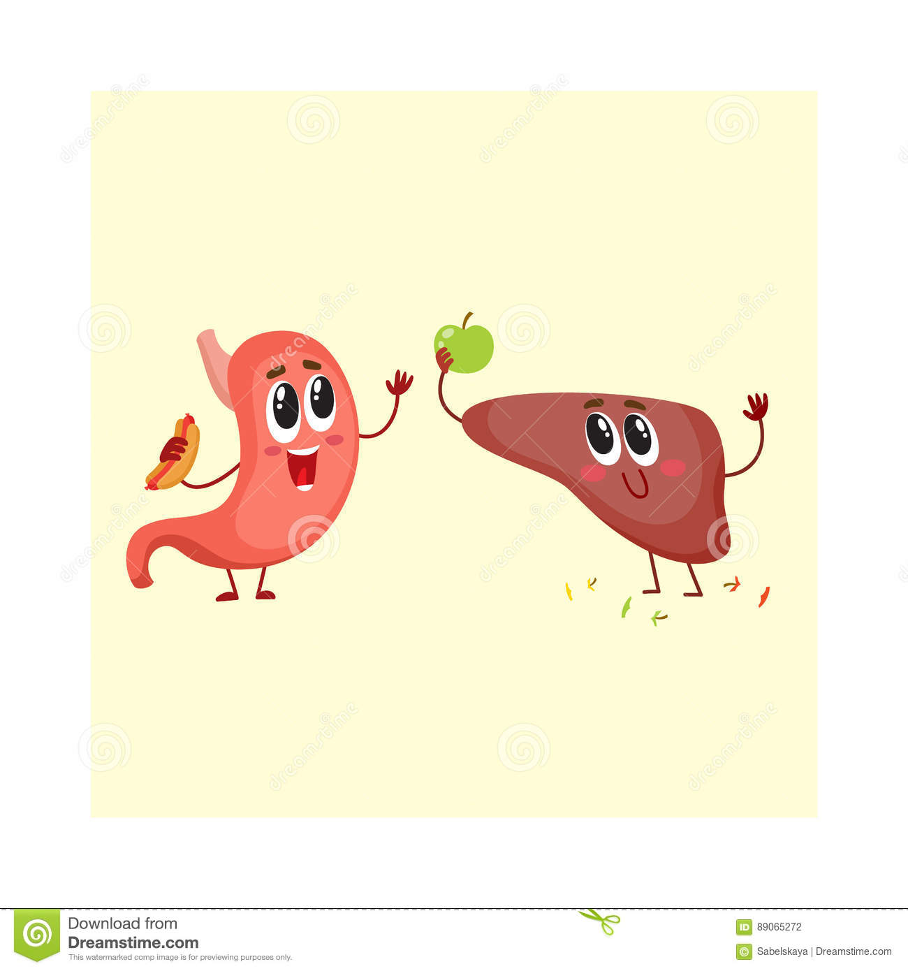 cute and funny smiling human stomach and liver characters stock