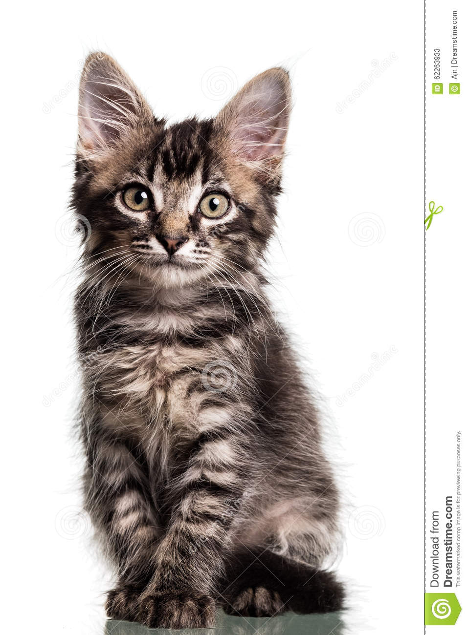 Cute Furry Kitten Stock Image Image Of Relaxed Baby