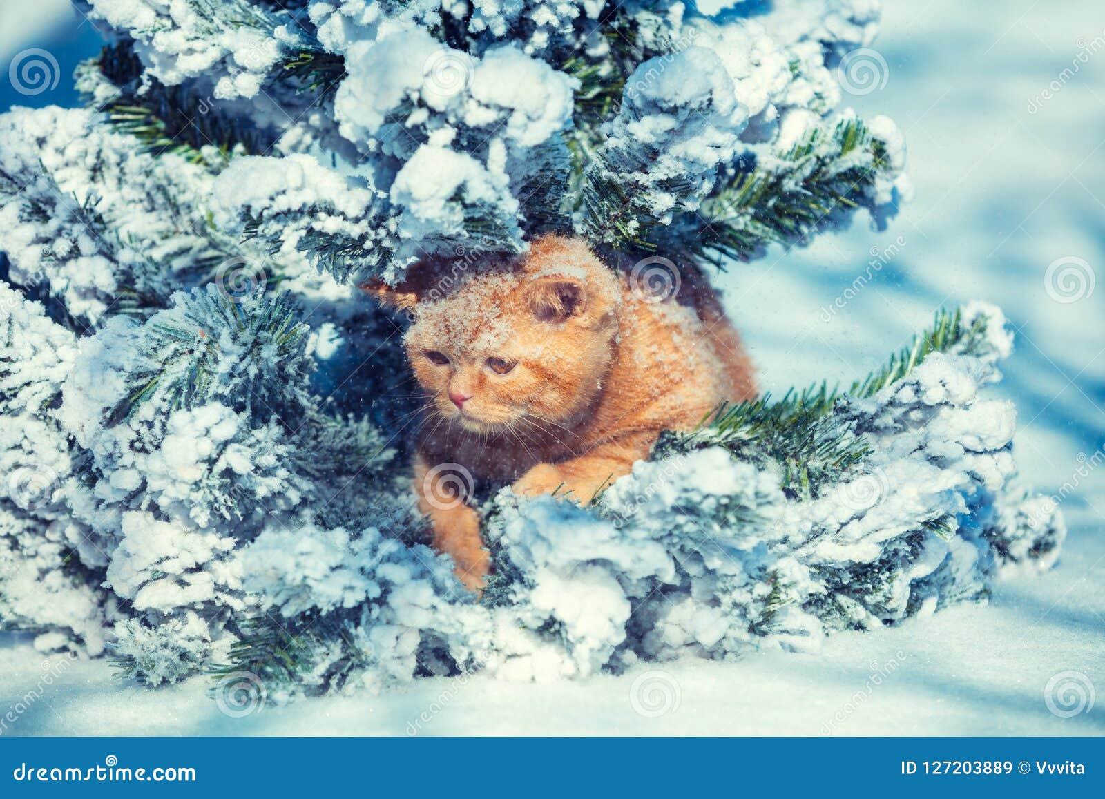 Cute ginger kitten sitting on the fir tree in winter