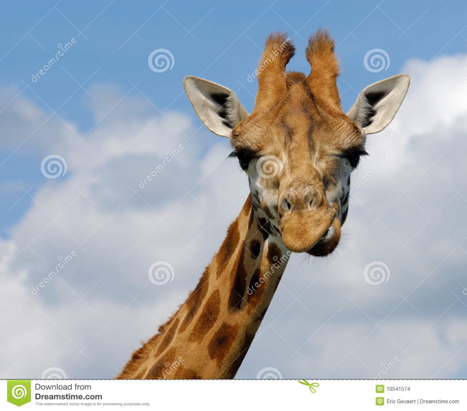 Cute giraffe stock photo. Image of long, pattern ...