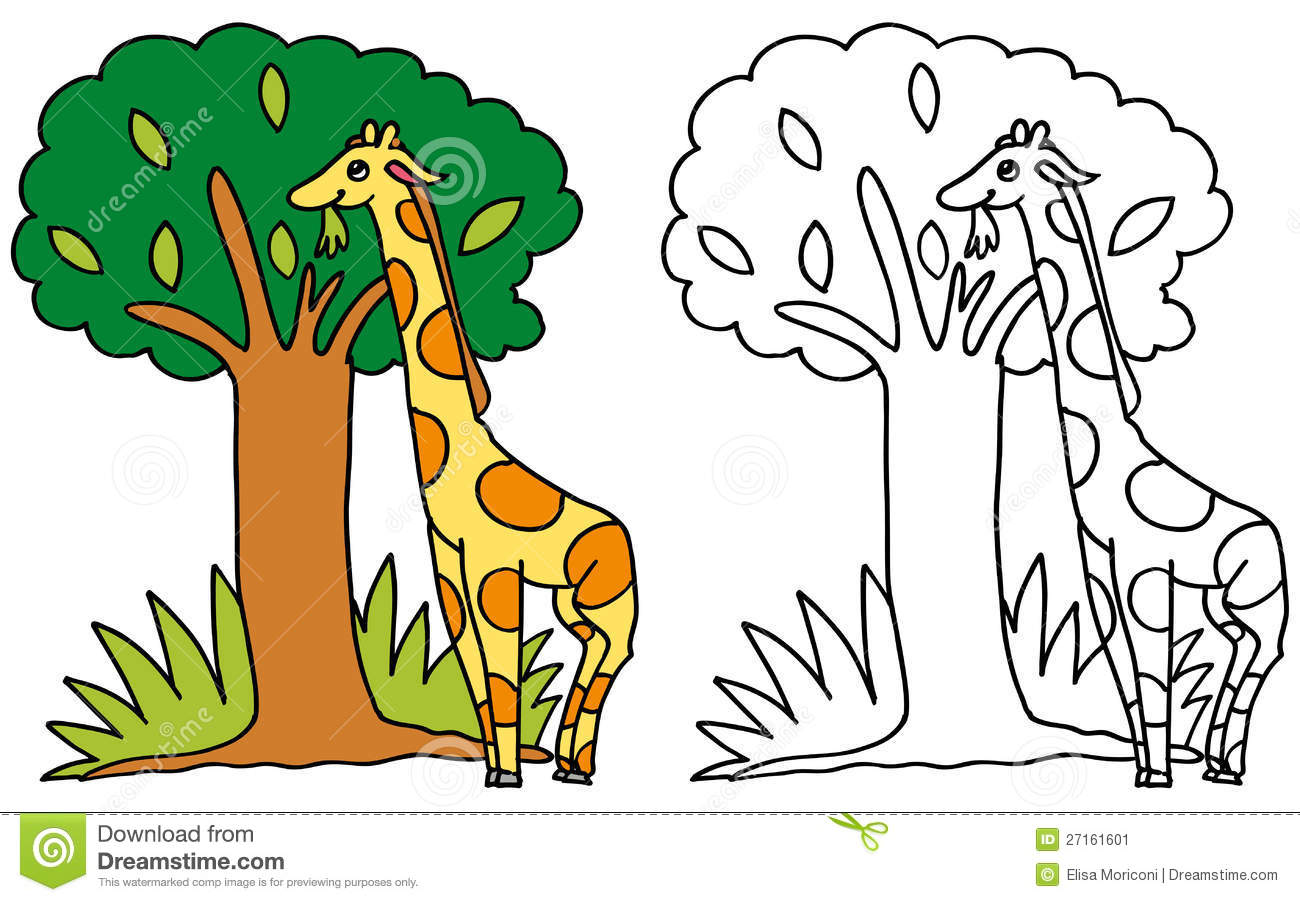 Cute Giraffe Eating Leaves COLOR And BW Stock Image